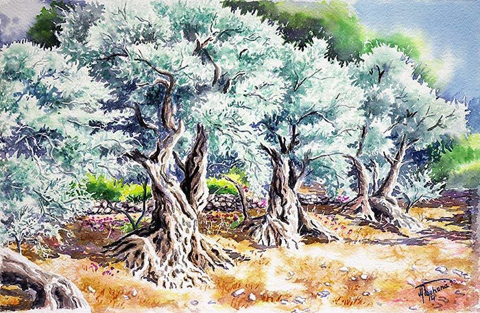 Bchehleh olive trees - Art prints