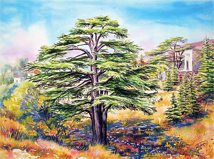 Cedars of Lebanon - Art print reproduction