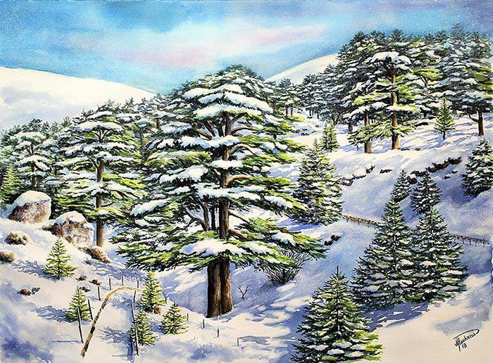 Cedars of God under snow