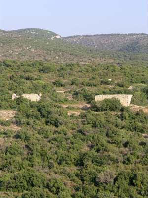 Land fields of thyme zaatar